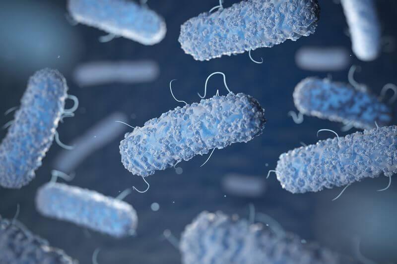 Bakterie Nahaufnahme